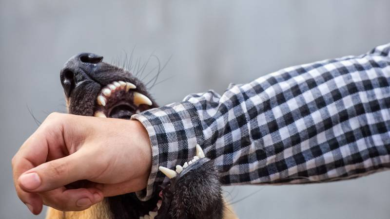 What to do if you are bitten by someone else's dog? What to do if your dog bit someone else? Read this blog post to learn more about Virginia's laws in dog bite cases and your rights.